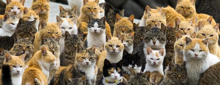 Egy sziget, amin a macskák vették át az uralmat