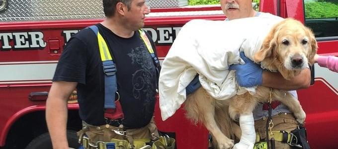 Busz elé vetette magát a hős kutya, hogy megmentse vak gazdája életét