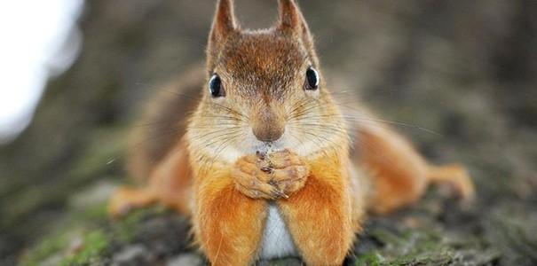 20 állat, akik tökélyre fejlesztették a pózolást