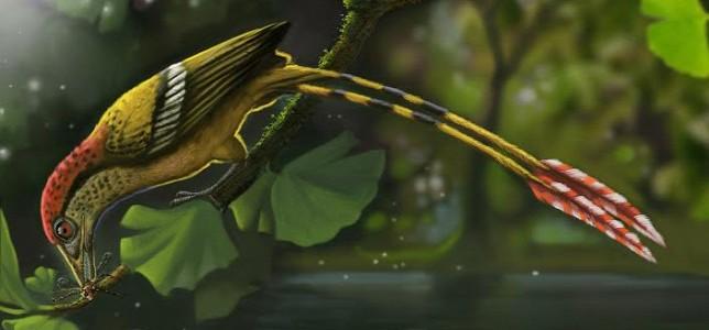 115 millió éves ősmadárra bukkantak Brazíliában