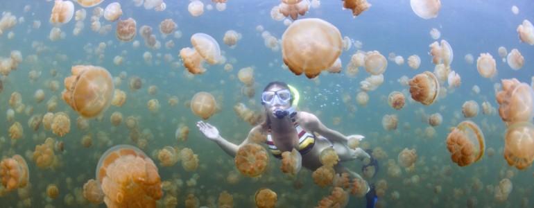 Több millió medúzával pancsolhatsz Palau-szigetén