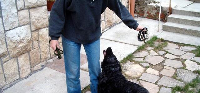 Magyar kutatók lehetnek a kutyáról emberre fordítás úttörői