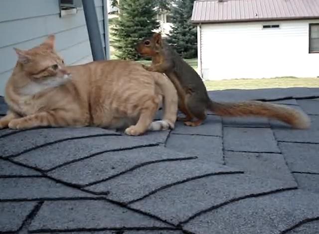 macska, mókus