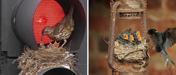 12 különleges, szokatlan helyre épült madárfészek
