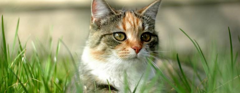 4 tipp, hogy a macskád jobban bírja a hőséget