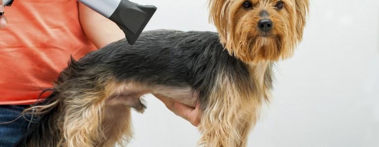 Tényleg jó ötlet kutyusodnak a nyári frizura?