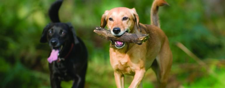 4 veszély, ami a parkban fenyegeti a kutyusodat