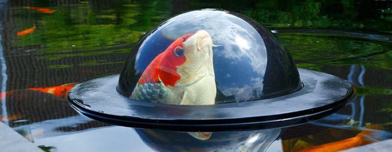 Ezzel a fura találmánnyal kikukkanthatnak a halak a nagyvilágba