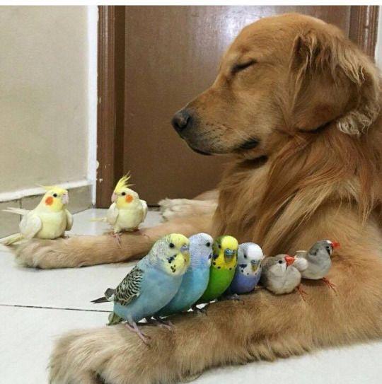 kutya, papagáj