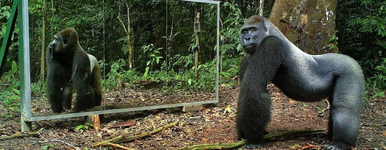 Ezek a vadon élő állatok nem tudnak mit kezdeni a tükörképükkel