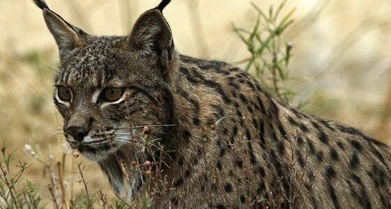 Kihalás fenyeget 23 ezer állat- és növényfajt