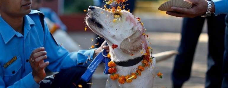 Kukur Tihar – egy fesztivál a kutyák tiszteletére