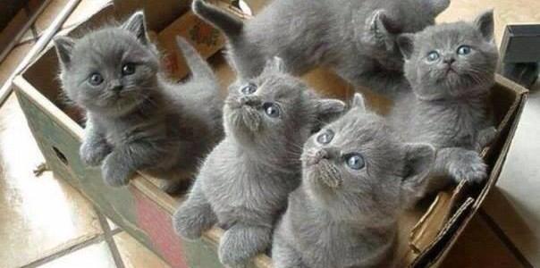 Mi legyen a cicánk neve?