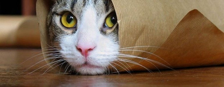 20 pillanat, amikor megmutatkozott a macskák igazi énje