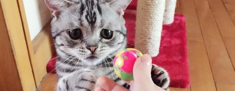 Ő itt Luhu, az internet legszomorúbb cicája
