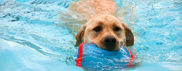 Itt van a kutyabarát magyar strandok listája