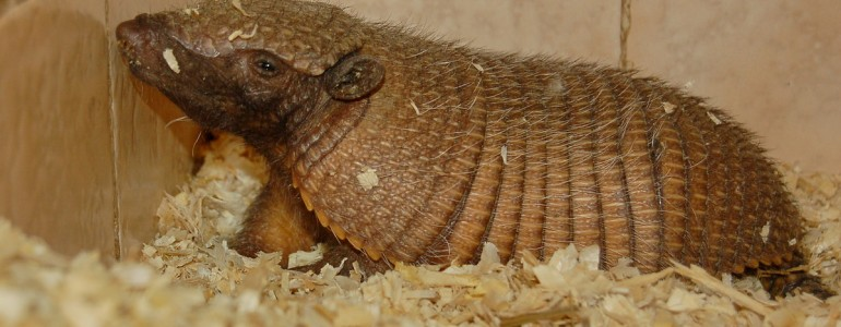 Nagy szőröstatu született a Miskolci Állatkertben