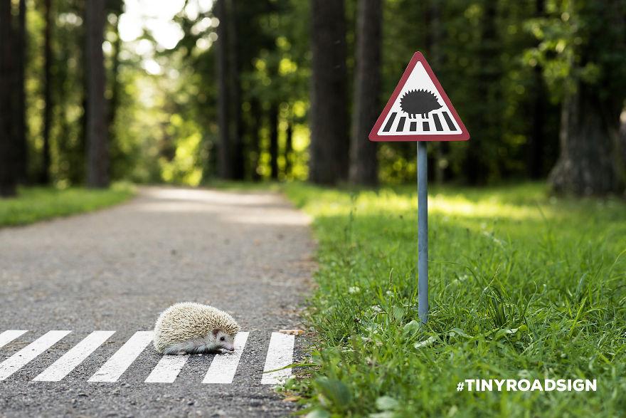 Miniatűr közlekedési táblákkal hívják fel a figyelmet a városban élő állatokra