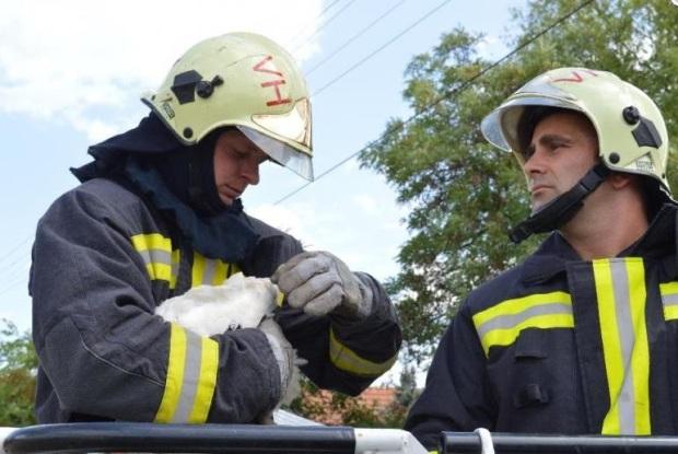Gólyafiókát mentettek a hódmezővásárhelyi tűzoltók