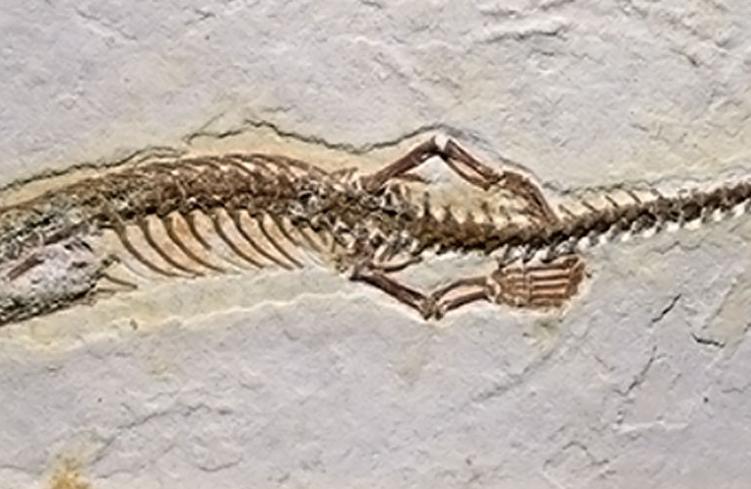 Négylábú kígyóra bukkantak Brazíliában