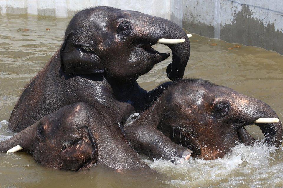 Így hűsölnek a kánikulában a Veszprémi Állatkert lakói