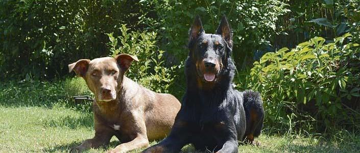 Hős kutya találta meg az 5 napja eltűnt Ilonka nénit