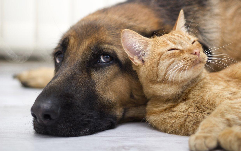 Embereket megillető jogokat kaptak a kutyák és a macskák egy spanyol kisvárosban