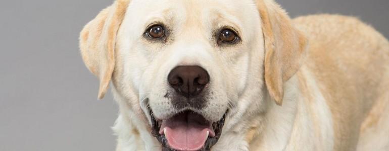 7 nagytestű kutyafajta gyerekes családoknak