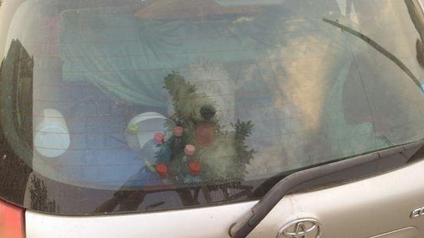 A legnagyobb forróságban is az autóba zárva, víz nélkül tartják ezt a szerencsétlen kutyát