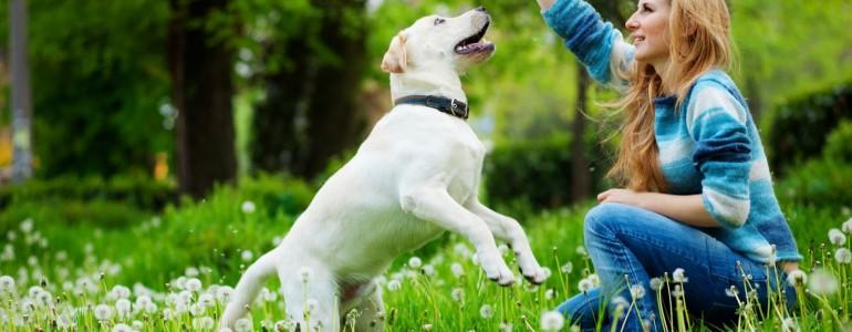 Amikor a kutya átveszi a gazdi szerepét