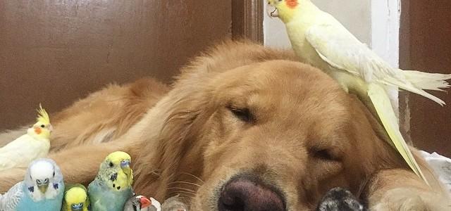 Egy kutya, egy hörcsög és nyolc madár a világ legédesebb csapata