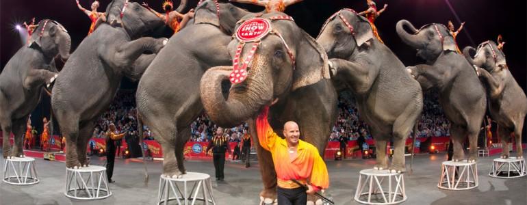 Betiltották a cirkuszi állatprodukciókat Mexikóban
