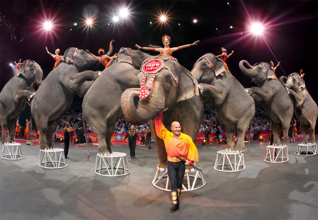 cirkusz, elefánt
