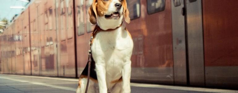 Idén nem utazhatunk kutyával az expressz vonatokon