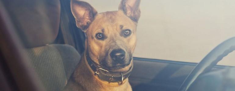 Te is megmentheted a forró autóba zárt kutyák életét!