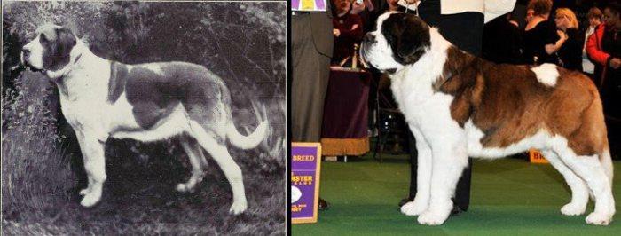 Ezt tette 100 év nemesítés a kutyákkal