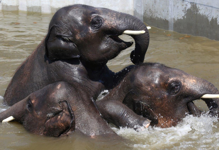 Strandolás elefánt módra