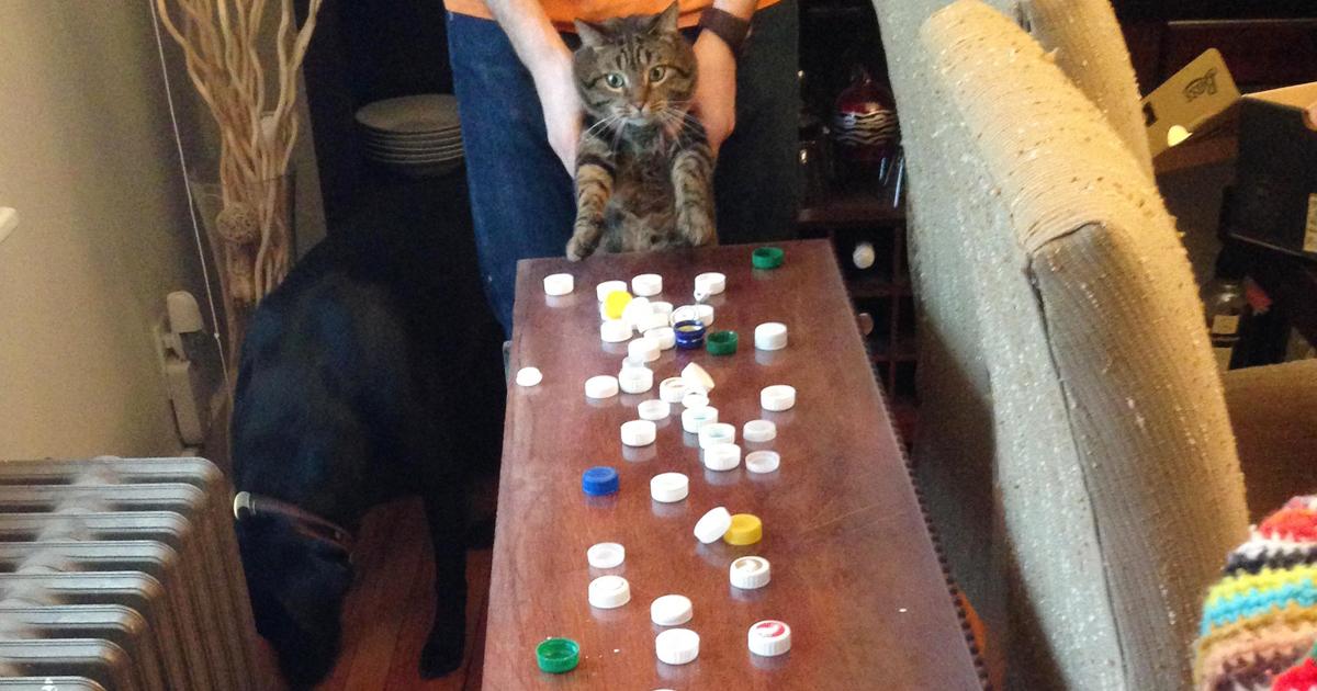 Ezek a cicák igazi függők, ugyanis mindenféle kacatot felhalmoznak