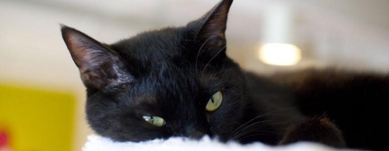 Egy kávézó, ahol italod mellé egy fekete macska is jár