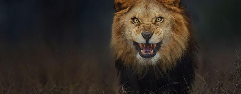 A támadás előtt néhány pillanattal fotózta le a dühös oroszlánt