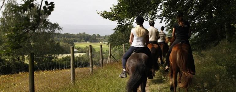 Ha nyár, akkor lovastábor… 1. rész