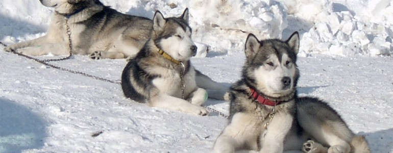 A 6 legkonokabb kutyafajta