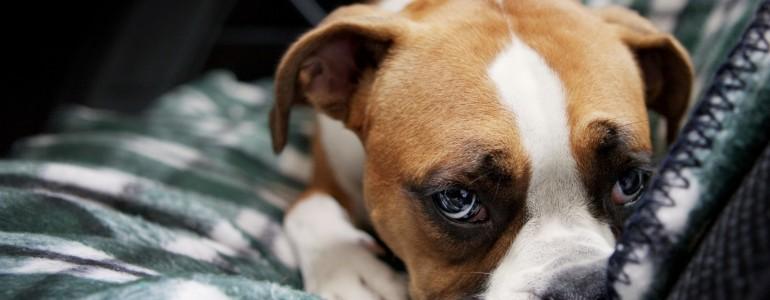 Segítség, allergiás a kutyám! Mit tegyek? – 1. rész