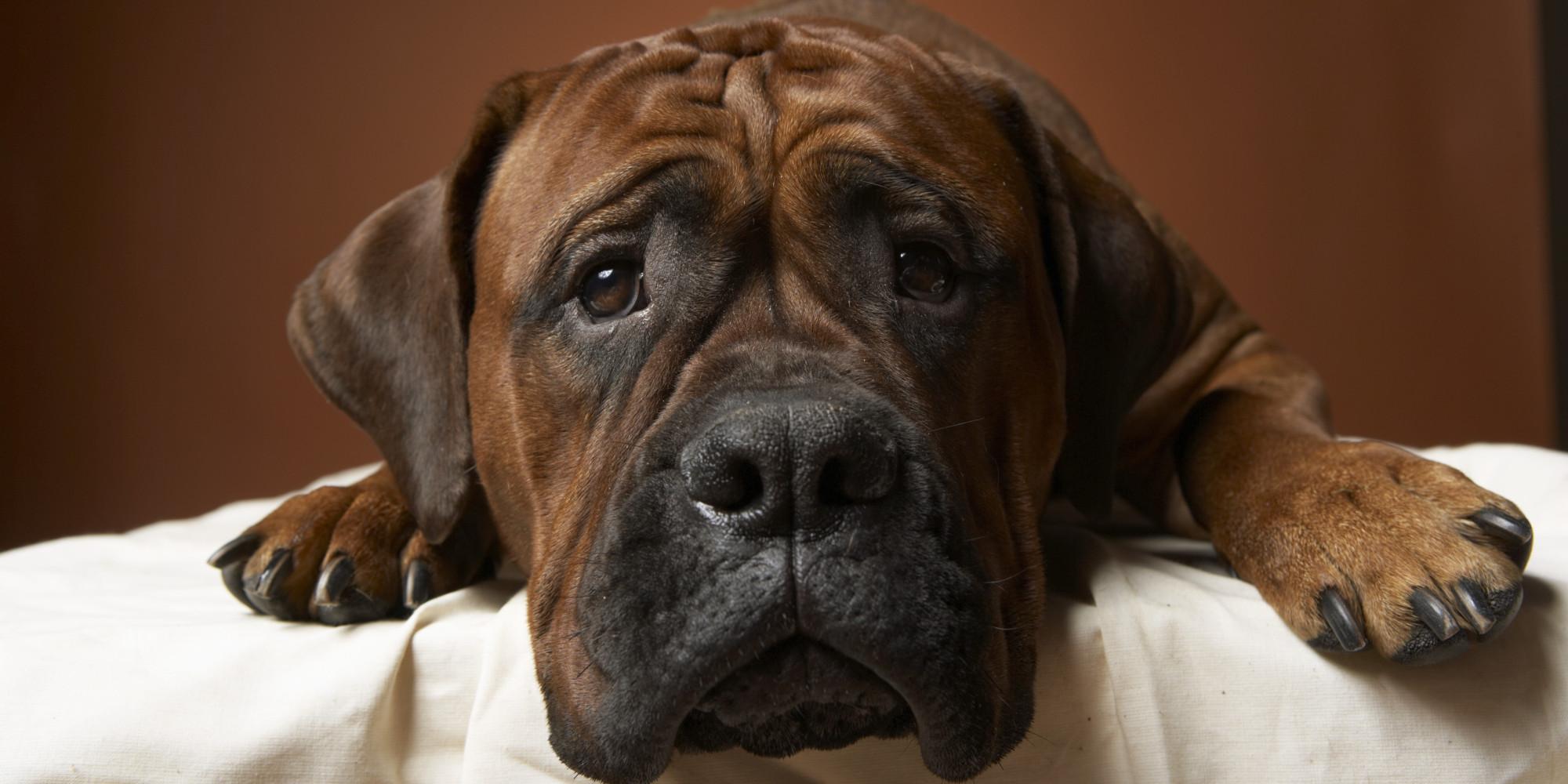 Segítség, allergiás a kutyám! Mit tegyek? – 2. rész