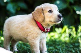 A 8 leghűségesebb kutyafajta