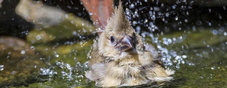 Így segíthetsz a kánikulában a vadon élő állatoknak