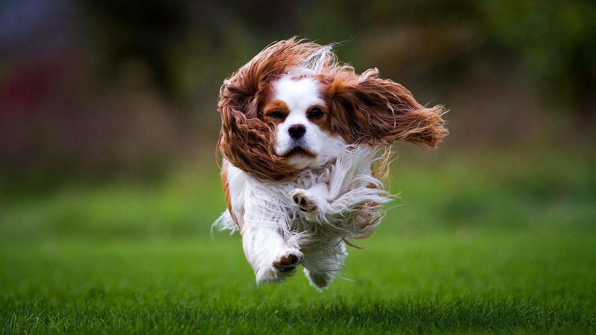 4 jel, hogy a kutyusodnak több mozgásra lenne szüksége