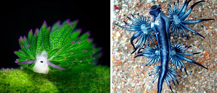 20 tengeri lény, aki mintha másik bolygóról érkezett volna