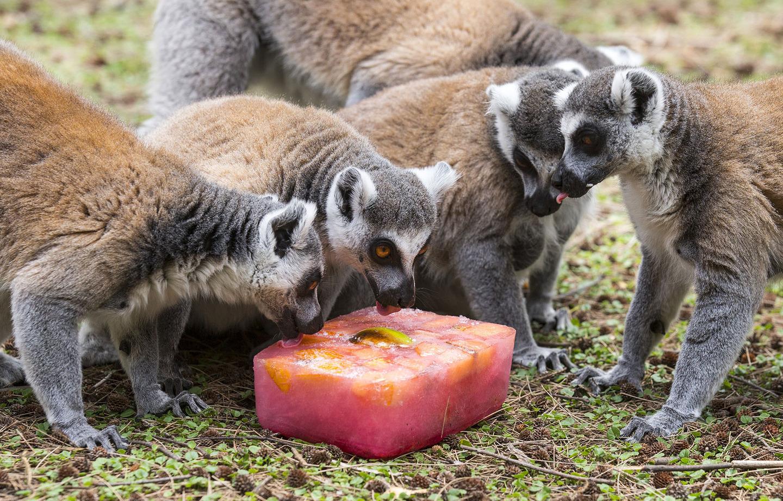 Így hűsölnek az állatok a világ állatkertjeiben