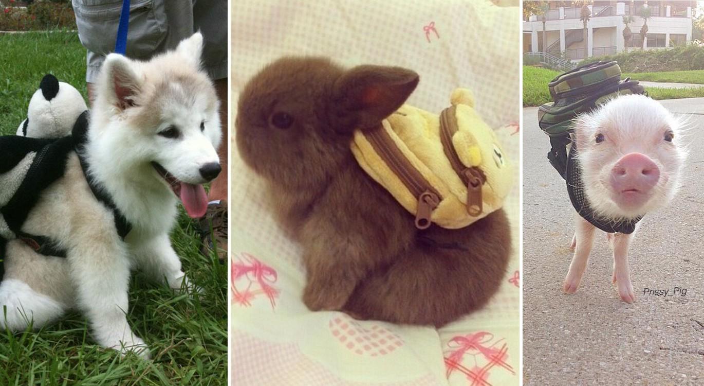 21 cuki állat, aki jobban várja az iskolakezdést, mint bármelyik gyerek
